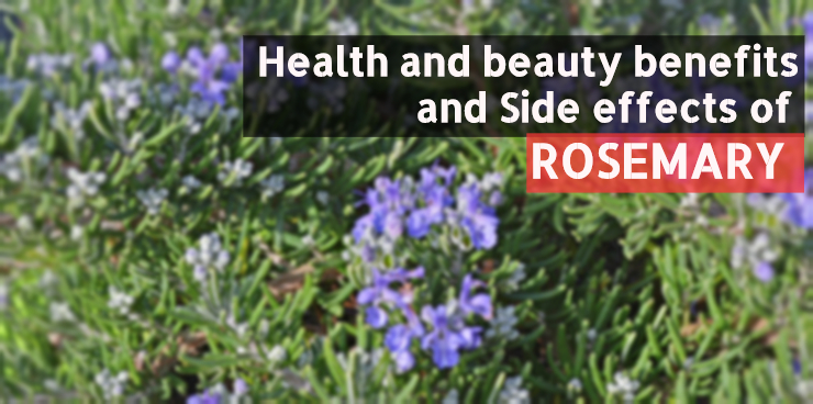 rosemary_Health and beauty benefits and Side effects